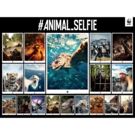 D&AD Awards 2019受賞報告:ADKクリエイティブ・ワンとCHERRYが携わったWWF Japan の#ANIMAL_SELFIEがグラファイトペンシルを受賞